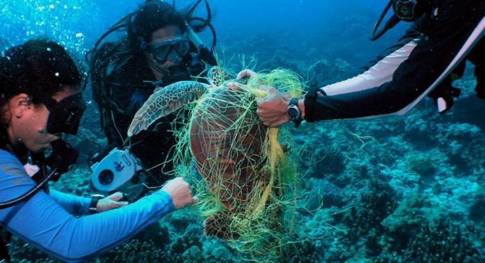 Sea Turtle Being Rescued Underwater Noaa1