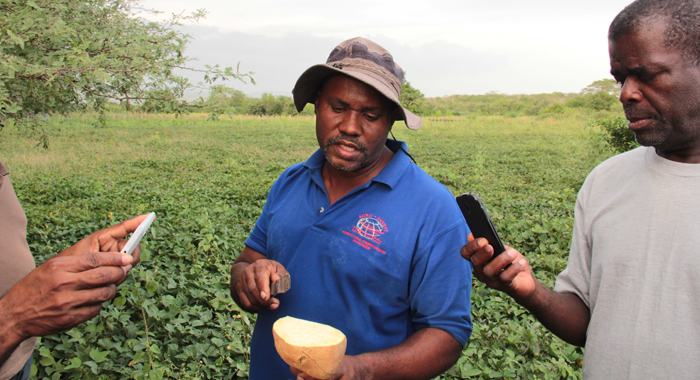 Ebony Park Agro-Park manager, Anthony Trout discusses potato cultivation with learning journey participants. (IWN photo)