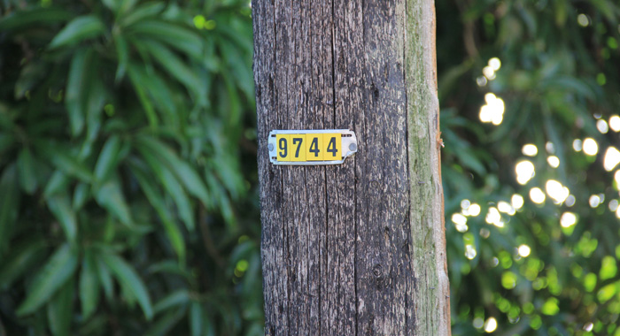 The number of the pole with the broken streetlight. (IWN photo)