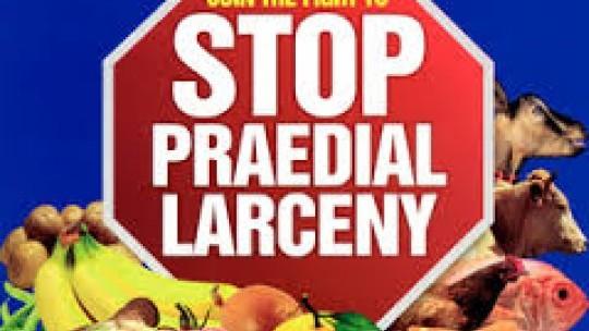 Praedial Larcenyt