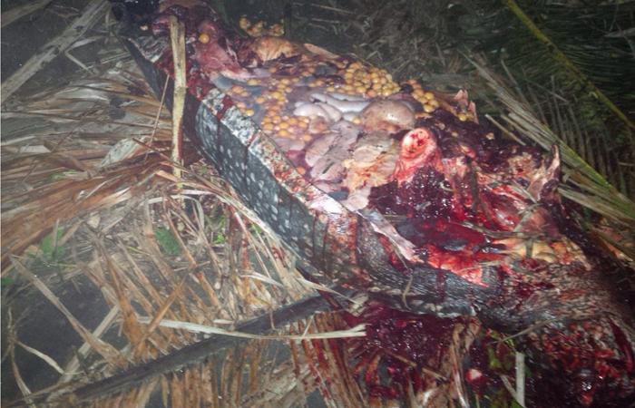 slain Turtle 1