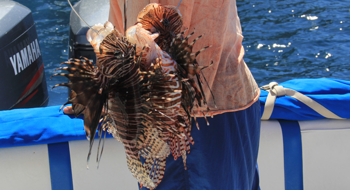 One Health Project Team helping to wipe out lionfish