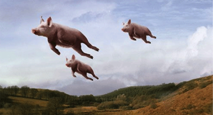 Pigs Can Fly But Not To Argyle
