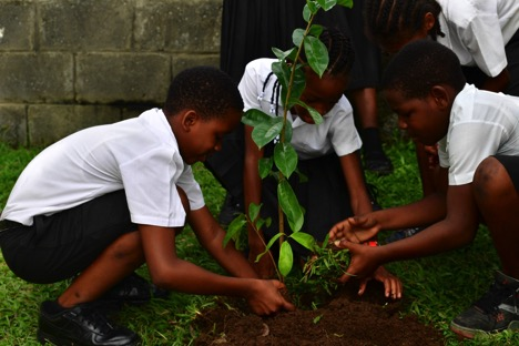 Students Planting A Soursop Tree