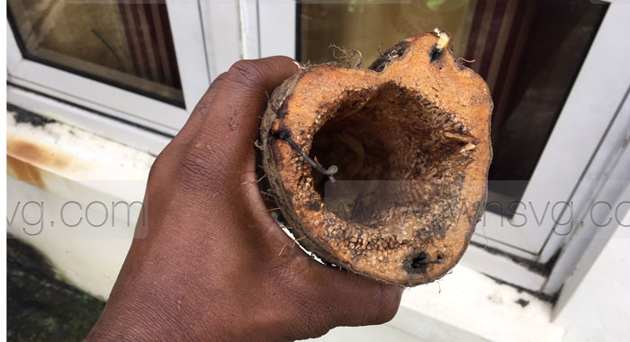 Hollowed Out Yam