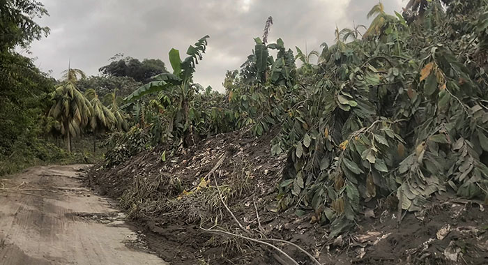 Damage To Agriculture